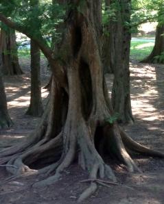 DR Arboretum