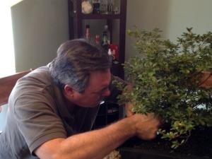 bonsai enthusiast